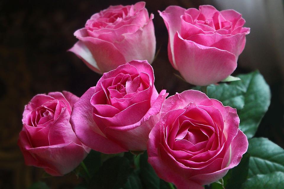 roses-3416748_960_720