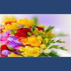Mesaj de felicitare cu prilejul sărbătorii de 8 martie