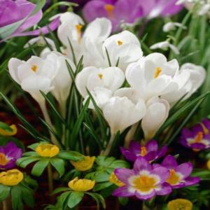 Mesaj de felicitare cu ocazia sărbătorilor de primăvară