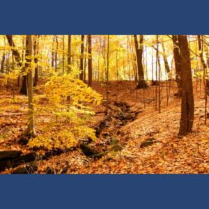 Mesaj de felicitare cu ocazia Zilei lucrătorului din silvicultură